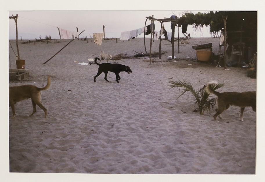 "Gabriel Orozco, ""Dogs in Chacaua"", 1999. Courtesy of Patricia Martín."